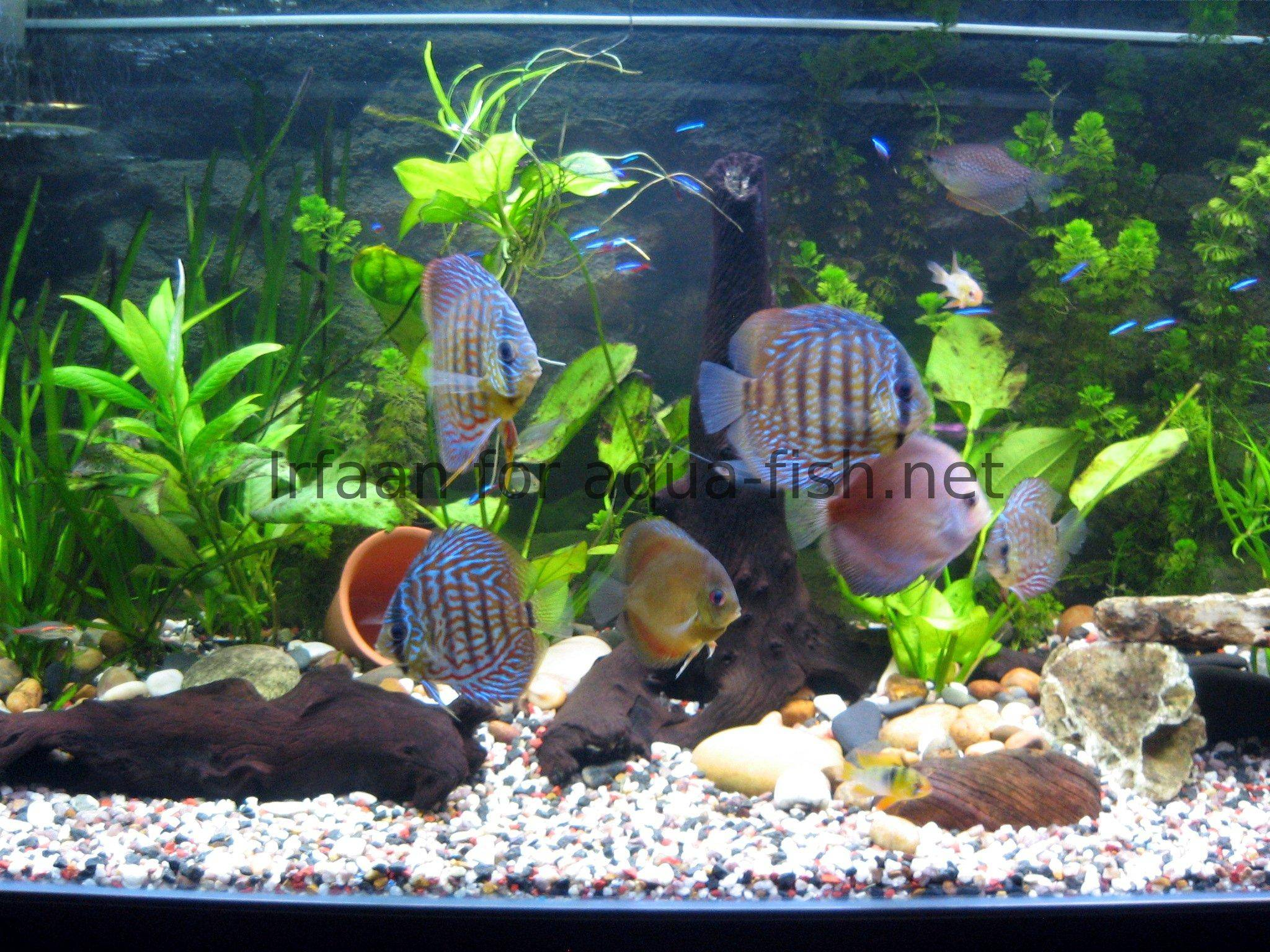 Decoration aquarium pas cher for Deco aquarium