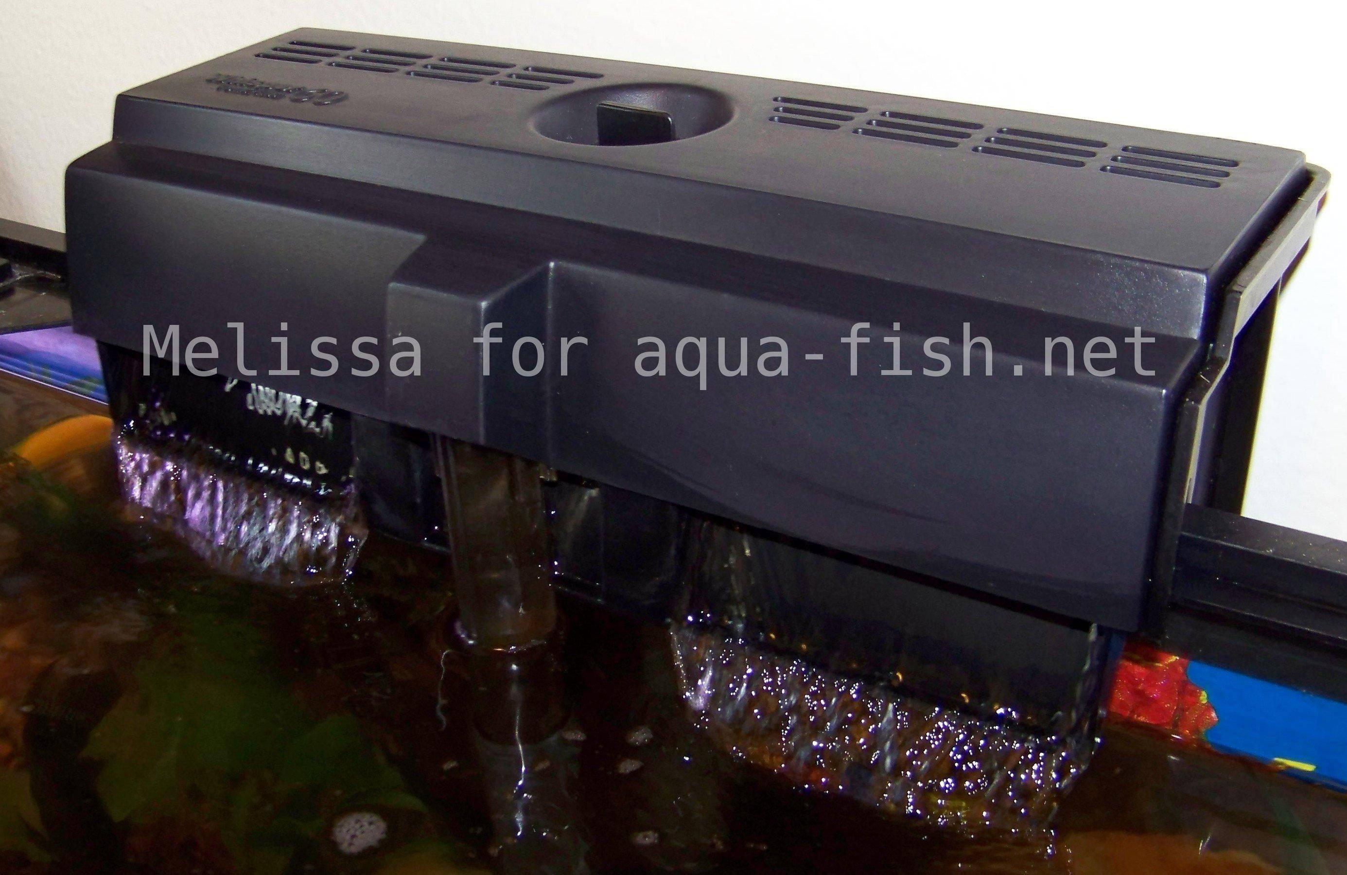 Poisson rouge et la qualit d eau for Filtre poisson rouge