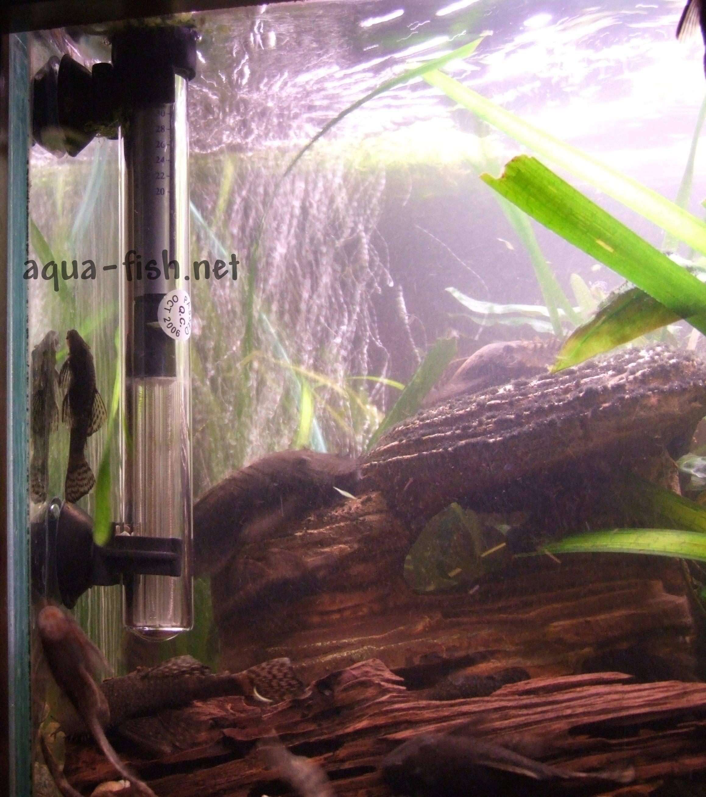 Appareil De Chauffage Pour Aquarium De Poissons