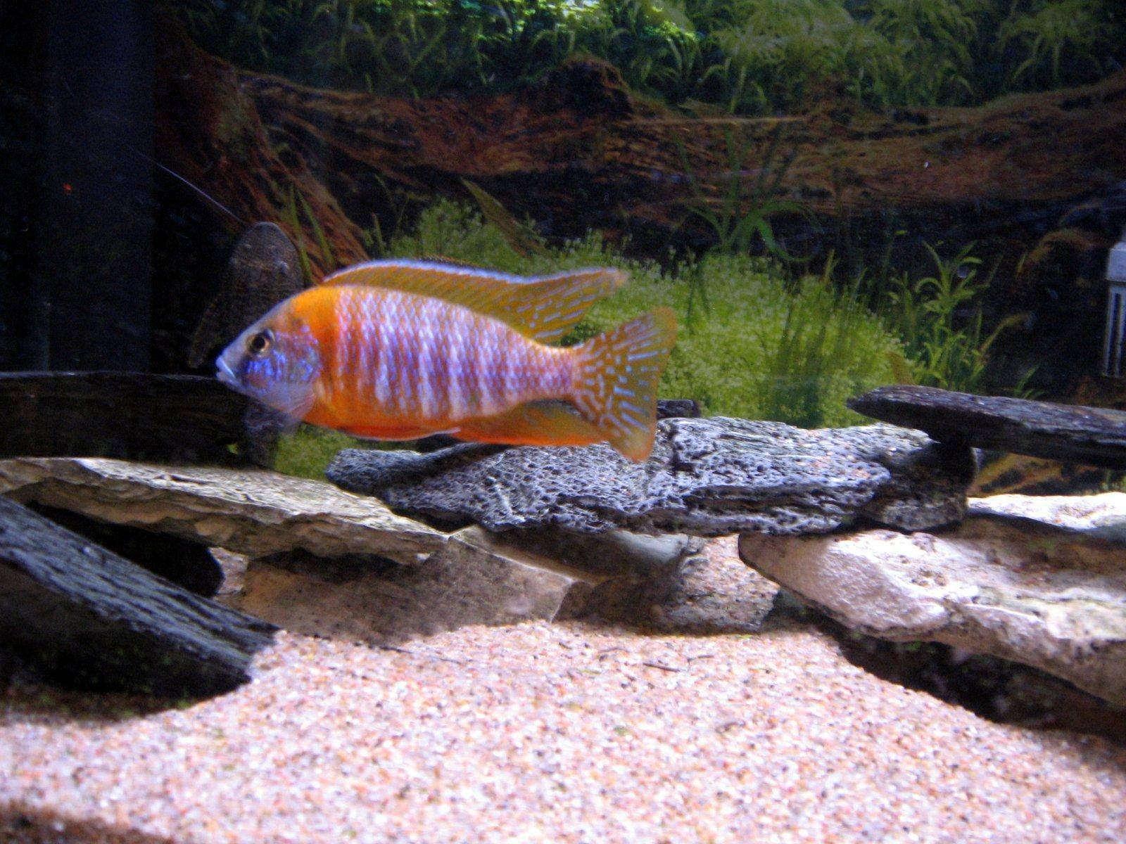 Gravier d aquarium for Gravier aquarium