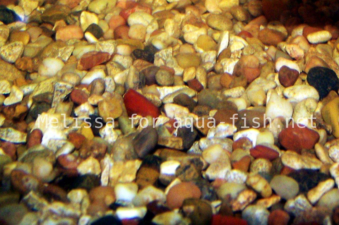 Roches d aquarium for Natural fish tank