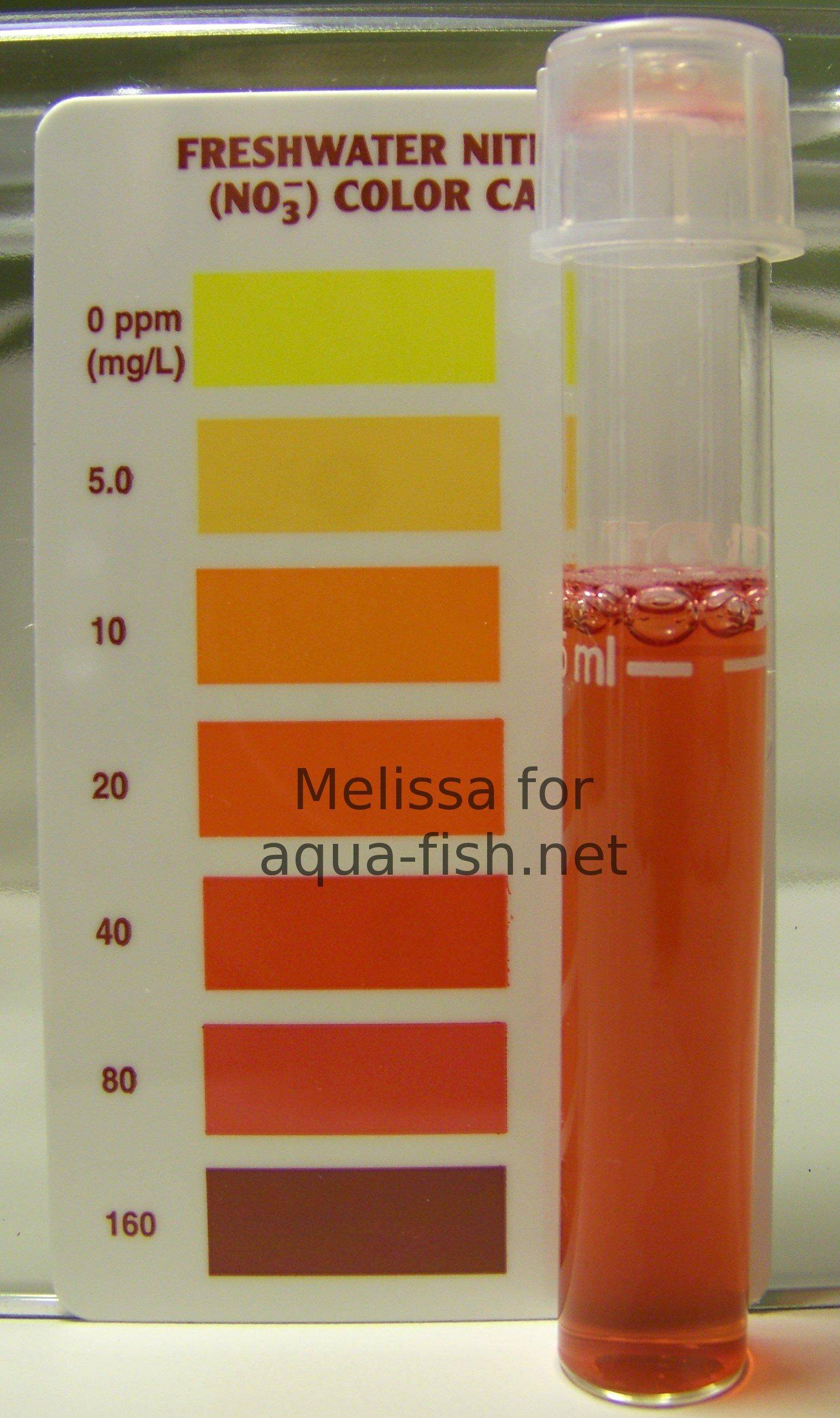 Aquarium et ammoniaque nitrates nitrites for Nitrite in fish tank