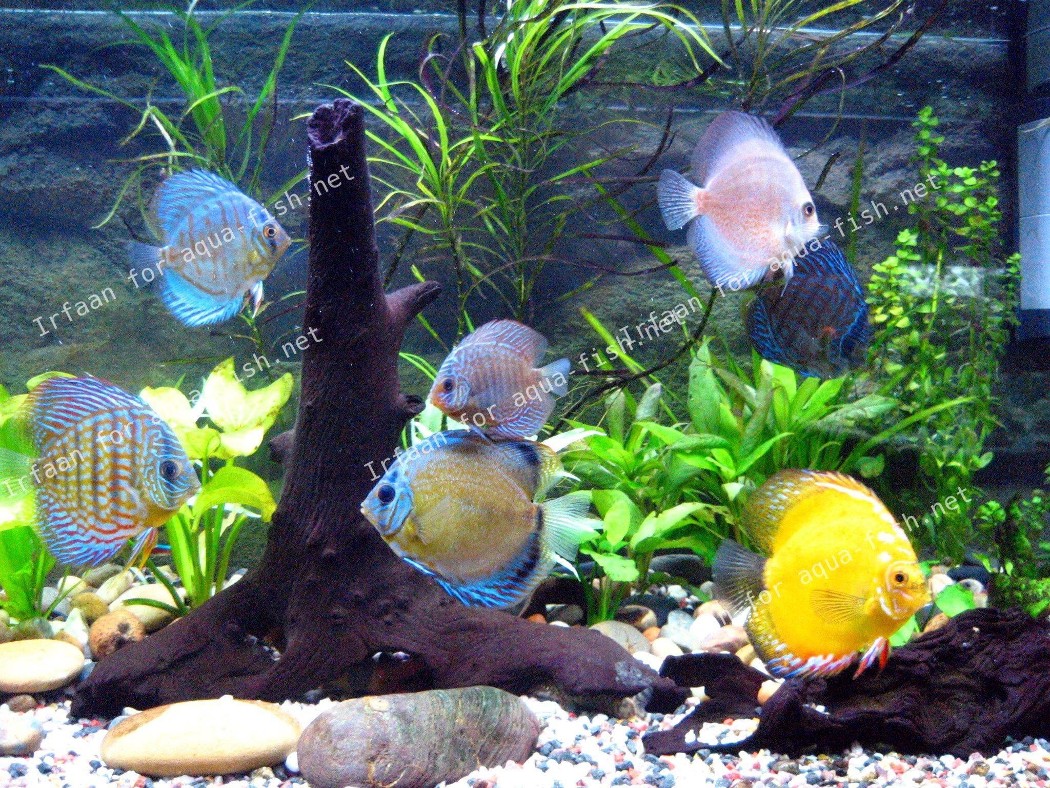 fish aquarium pets animals tropical fresh funny lol meme Car Pictures