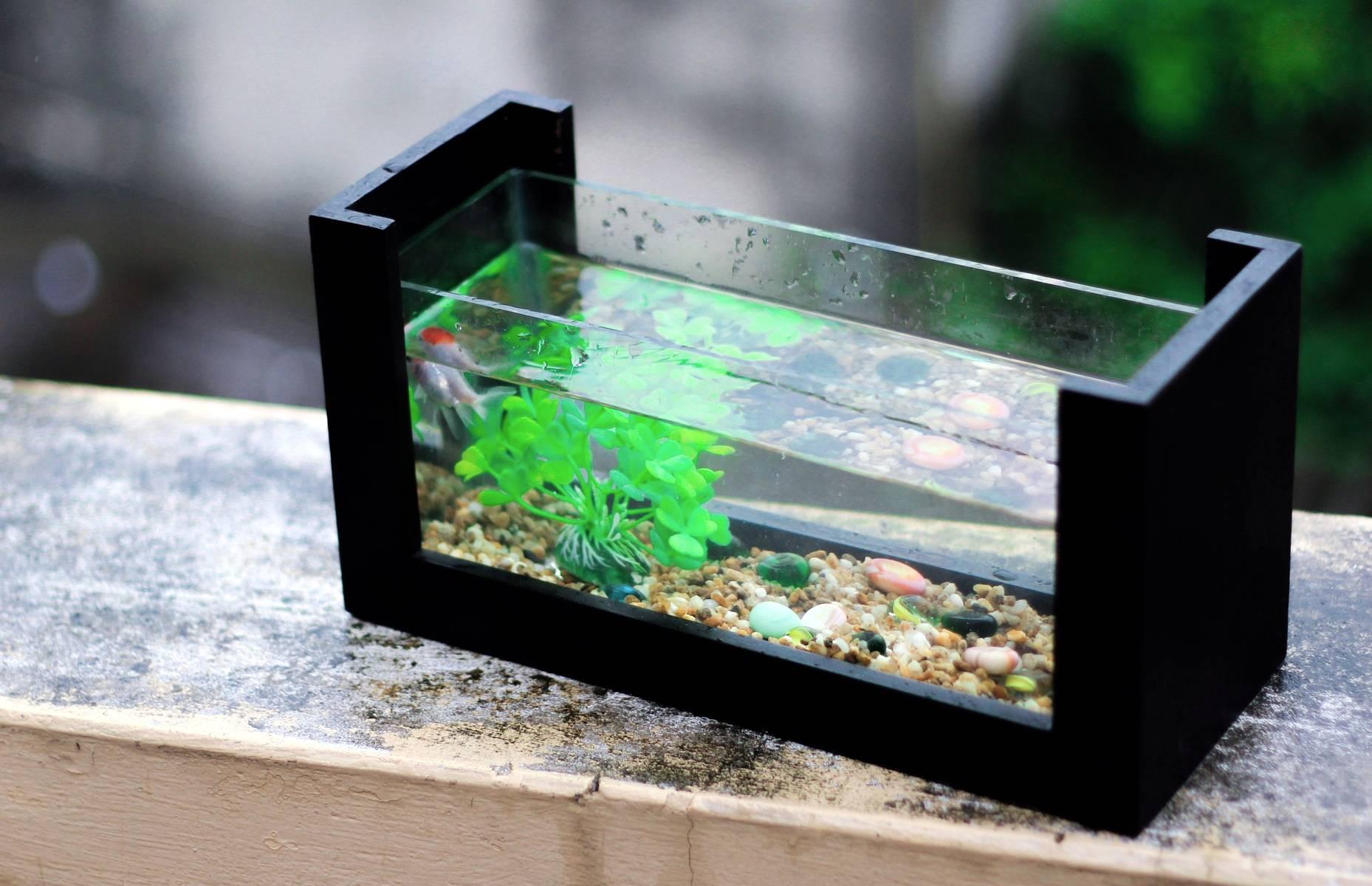 Comment nettoyer efficacement son aquarium?